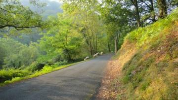Se balader à Bidart en vélo